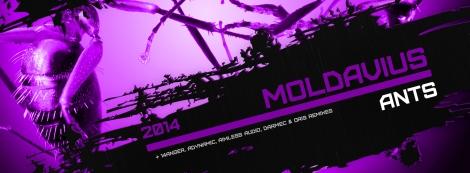 CS033-Moldavius-Ants-WebsiteCrop
